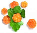 Artic_Cloudberry_10416